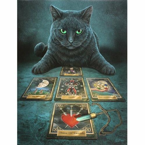 魔术师杨喵