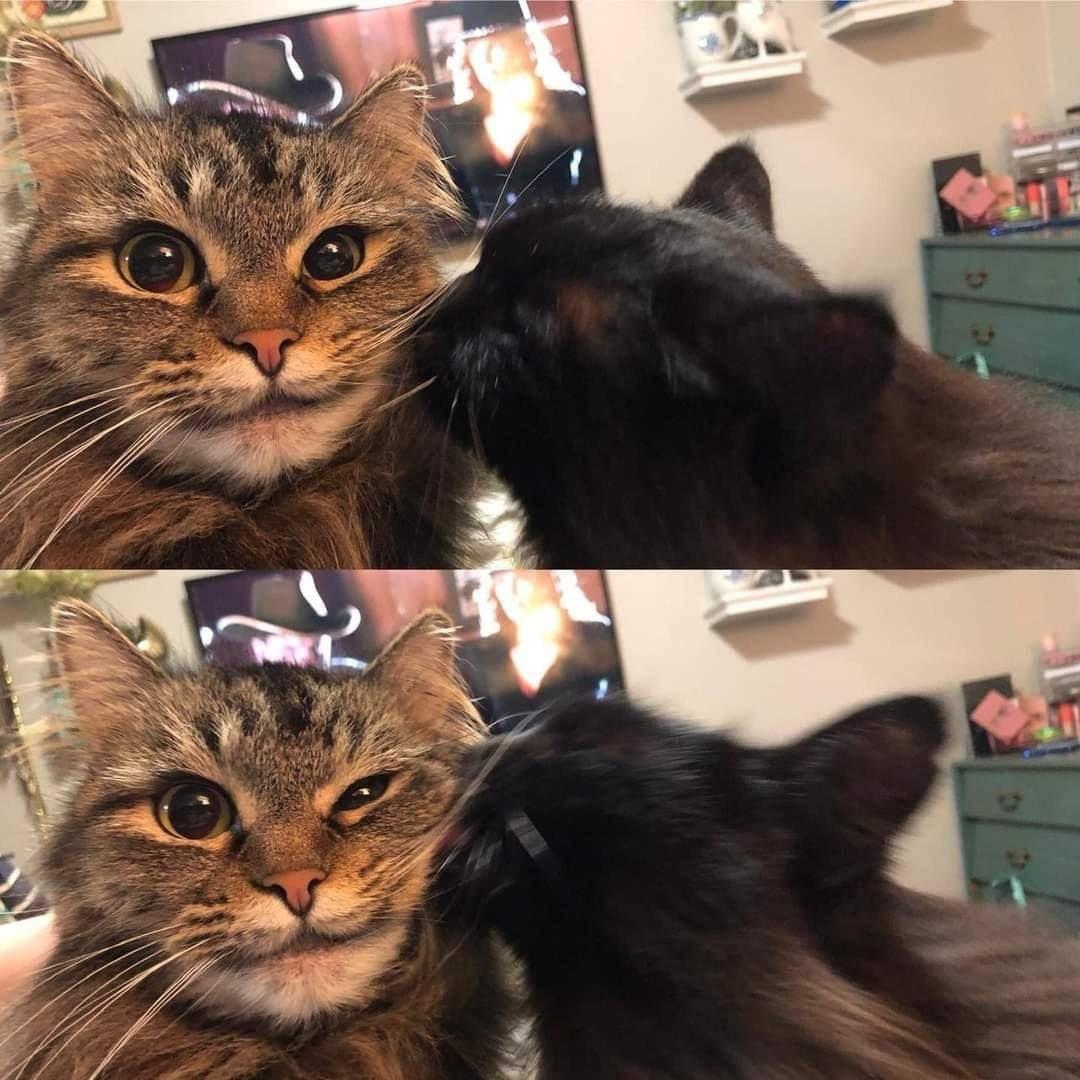 得意猫猫meme原图